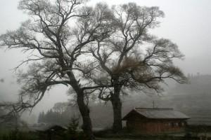 00 风雪中的古树